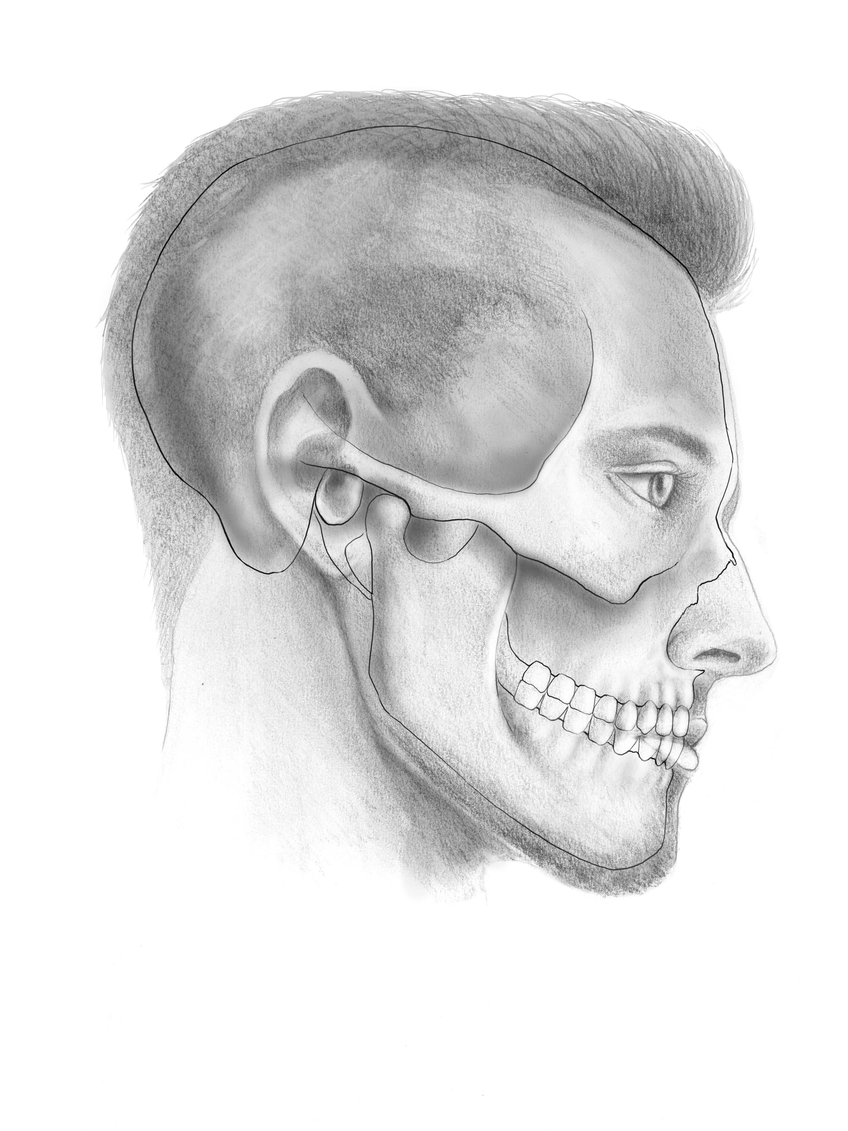 Facail Nerve Sketch 2
