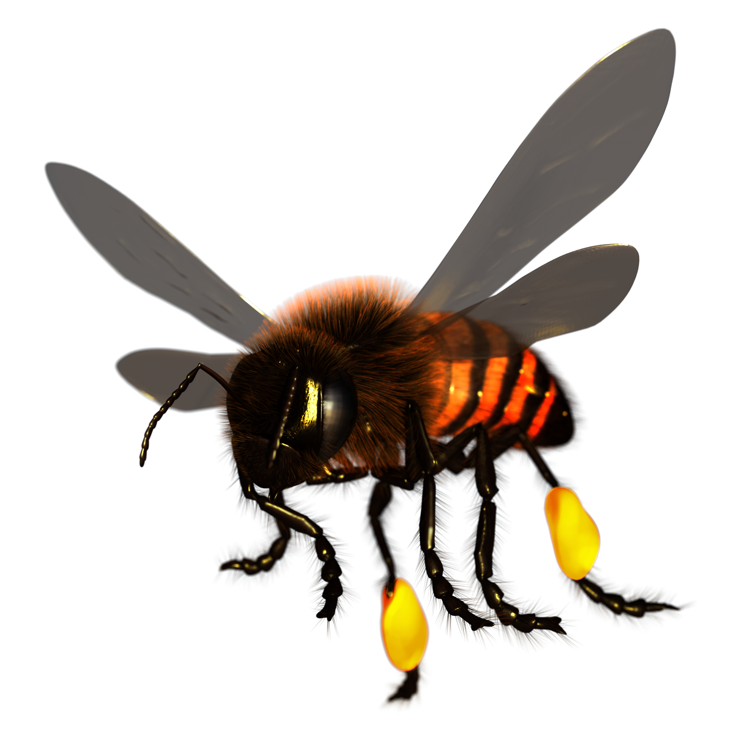 Honey Bee Render
